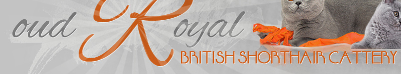 Enter Oud Royal website - in english